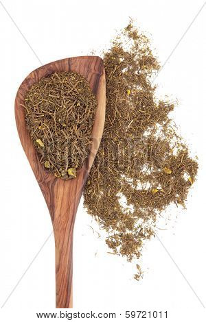 Goldenseal root herb used in herbal medicine in a wooden spoon over white background. Hydrastis canadensis.