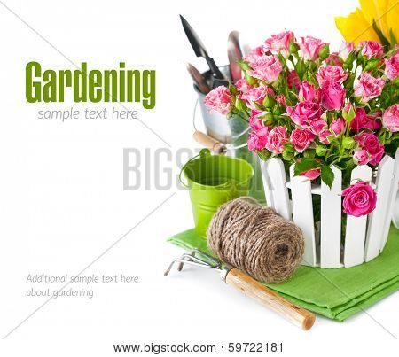 Pink roses and tulips with garden tools. Isolated on white background