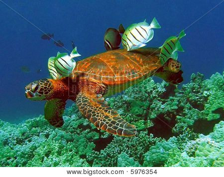 Turtle cleaning Station