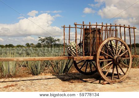 Old traditional mexican trailer in front of blue agave plantation poster