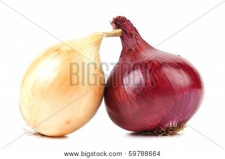 Close up of ripe onion red and white.