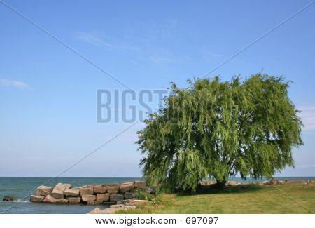 Willow Tree Lake
