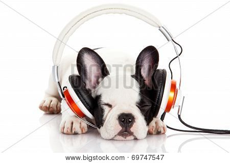 Dog Listening To Music With Headphones Isolated On White Background.  French Bulldog Puppy Portrait