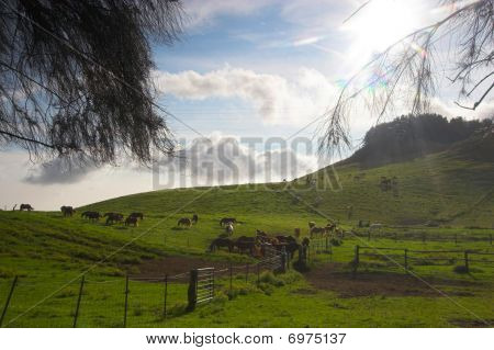 Green Landscape And Horses