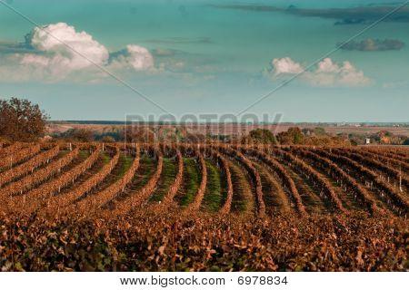 Autumn On The Wineyard