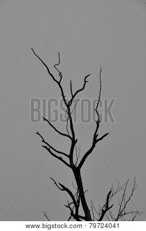 Tree Branches Dark Winter Day