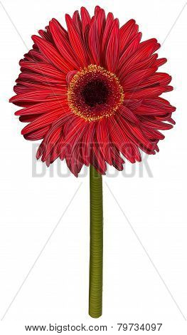 Red gerbera flower drawing