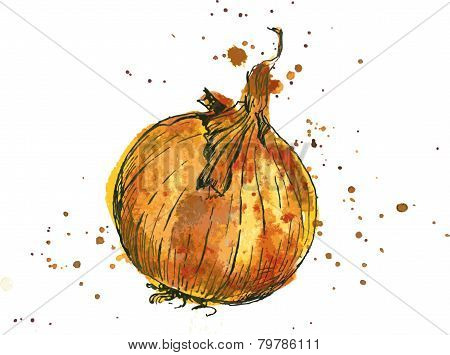 Hand drawn onion