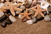 Assortment of starfish, seashells and smooth beach rocks in the sand poster