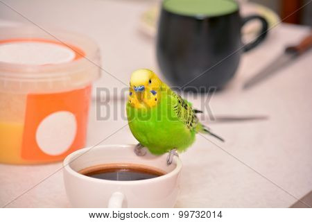 Budgie on a coffee cup