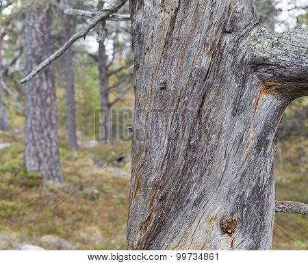 Close up on a huge trunk in a forest.