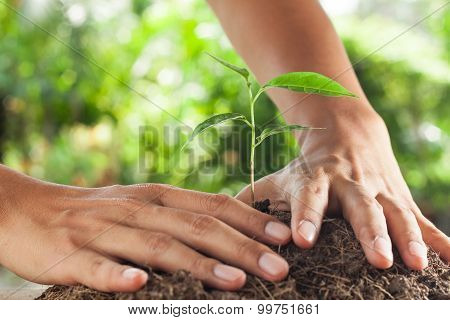 Hands Holding And Caring A Young Plant