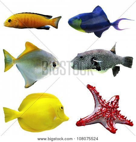 Exotic fishes, isolated on white