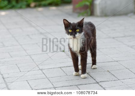 Outdoor portrait of kitten with yellow eyes
