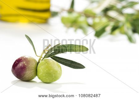 Olive Oil with Olive's Branch