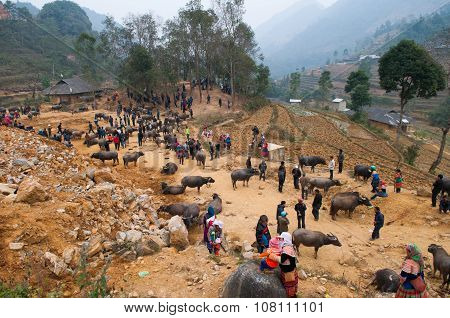 Ethnic minority people sell cattle in Can Cau traditional market in Laocai, Vie