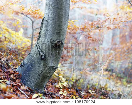Tree Trunk In Autumn Landscape