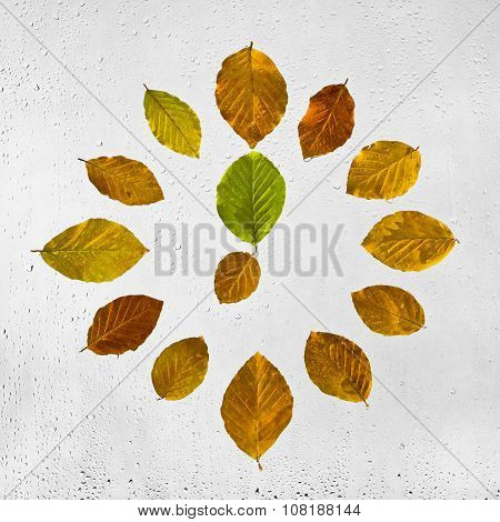 Clock stacked with colorful autumn beech leaves on the wet glass.  Seven o'clock.