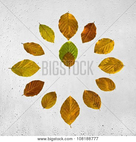 Clock stacked with colorful autumn beech leaves on the wet glass.Twelve o'clock. Noon. Midday