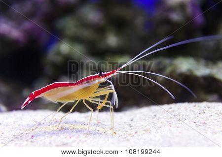 Shrimp on sea bottom