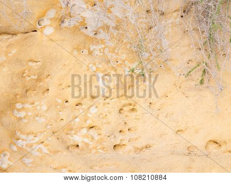 Rocky Surface And Drought-resistant Plant