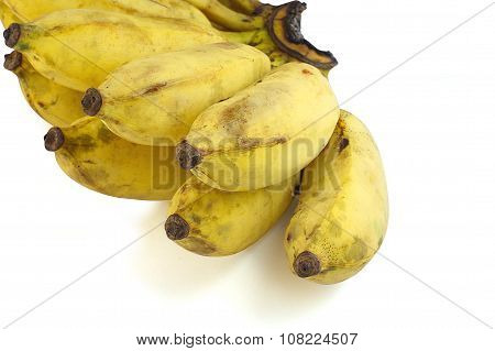 Pisang Awak banana Kluai Nam Wa Cultivate banana on isolate white background poster