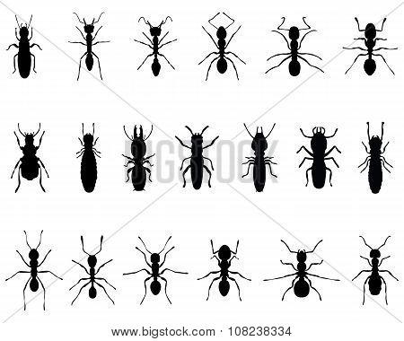 ants and termites
