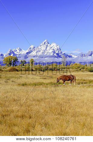 Grand Teton and the Teton Range, Grand Teton National Park, Wyoming