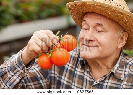Cheerful old farmer is carrying fresh vegetable