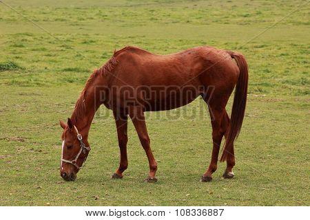 Horse in an autumn field