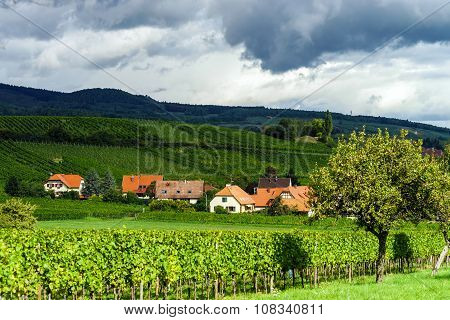 Summer Green Hills And Vineyards In France