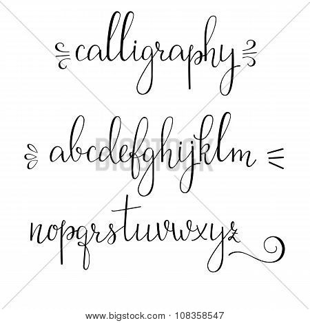 Calligraphy Cursive Vector Photo Free Trial