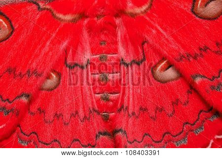 Texture Of Red Sikkim Silk Moth