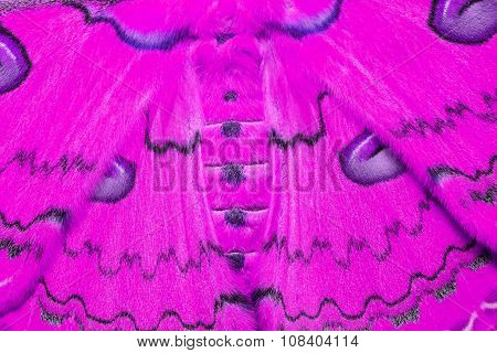 Texture Of Pink Sikkim Silk Moth