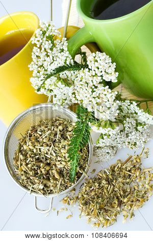 Achillea Millefolium Plant With Flowers / Fresh Yarrow Tea - Herbal Healing Homemade Remedy