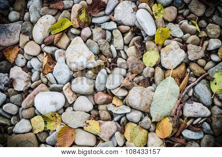 Sea Stones And Fallen Leaves In Autumn, Close-up