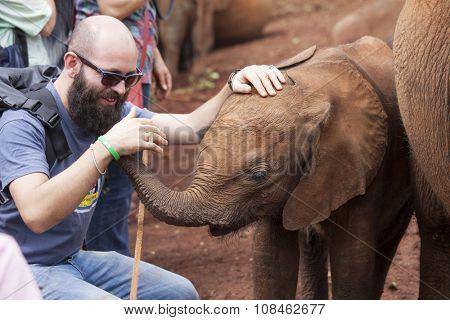 NAIROBI, KENYA- NOVEMBER 11, 2015: A baby elephant interacts with a tourist at the Sheldrick elephant orphanage in Nairobi, Kenya