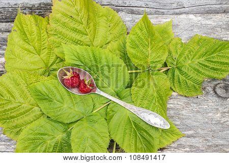Two Berries Fresh Raspberries Are In Cupronickel Spoon On Green Leaves