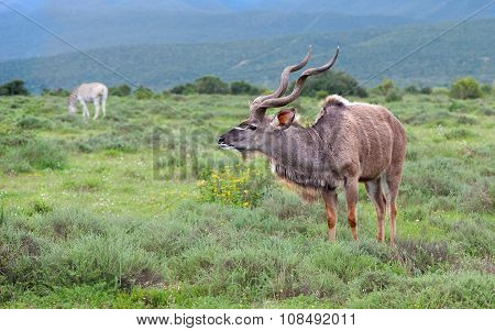 Alert Kudu