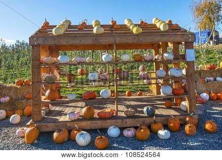 White Orange Yellow Pumpkins Box Squash Garden
