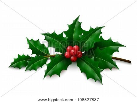 Holly on white background