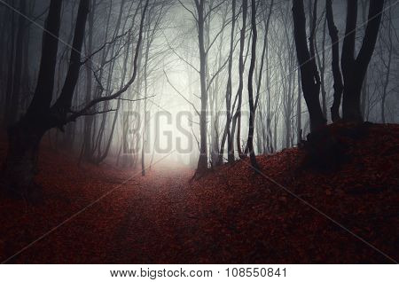 Path in Haunted Halloween forest with fog