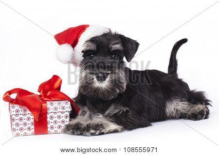 dog and cat wearing a santa hat