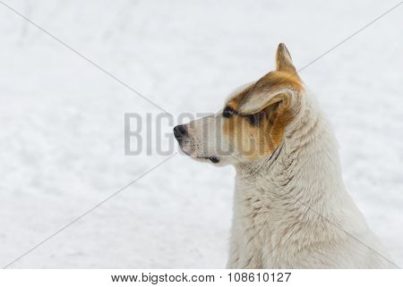 Outdoor portrait of mixed breed dog