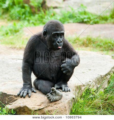 Cute Baby Gorilla