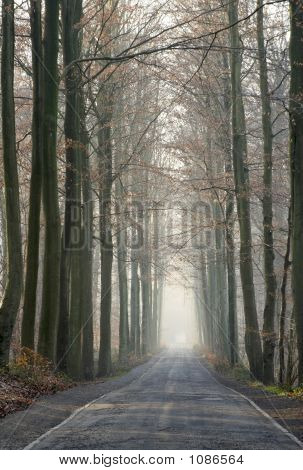 Old Forest Road In The Winter
