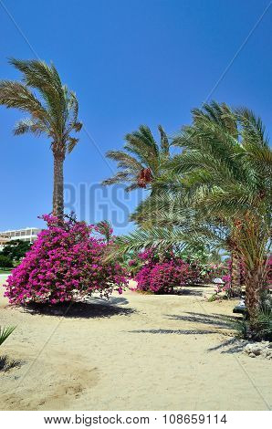 typical garden in a village in Marsa Alam