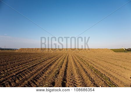 acres with indian corn in golden light and beautiful landscapeats
