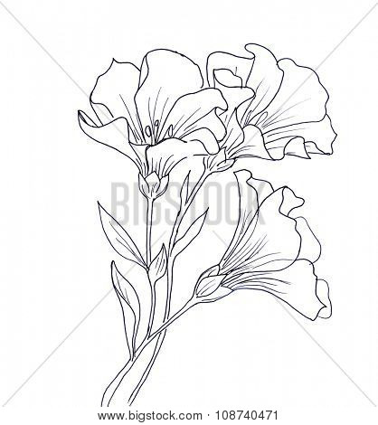 Line ink drawing of flower with butterfly. Black contour on white background
