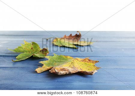 Autumn maple leaves on blue wooden table isolated on white